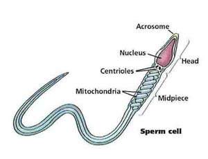 What can cause low sperm count